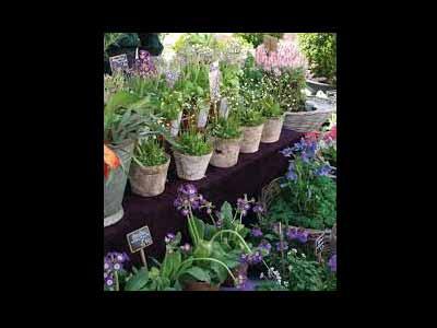 Blumen und Floristik Mildenberger