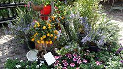 garten-und-pflanzenmarkt